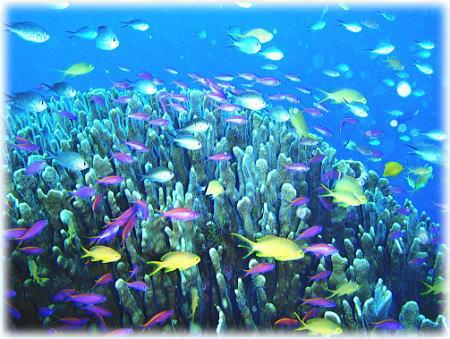 ビックリするくらい綺麗な魚達