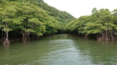 川ジャングル