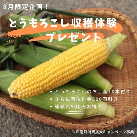 とうもろこし収穫体験キャンペーン