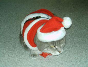 Cloe Santa