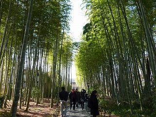 竹林の小径1