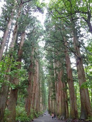 戸隠奥社杉並木