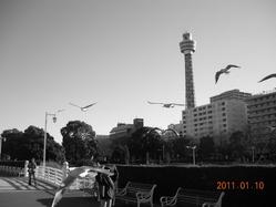 2011年1月_NIKON_photo 432