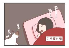 猫さんが猛烈に私を起こしてきた理由【ろぐ530】