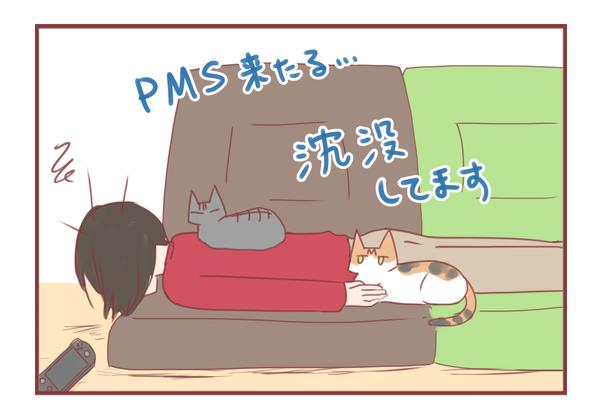 PMSでダウンしてるので猫さんの写真置いておきますね