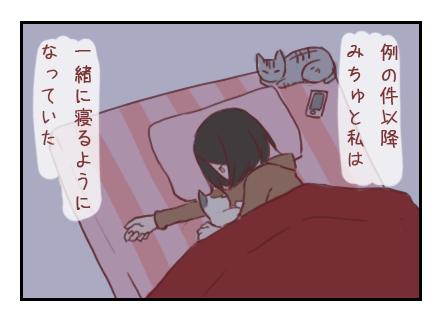 ご主人様(猫)の優しさ見出し画像