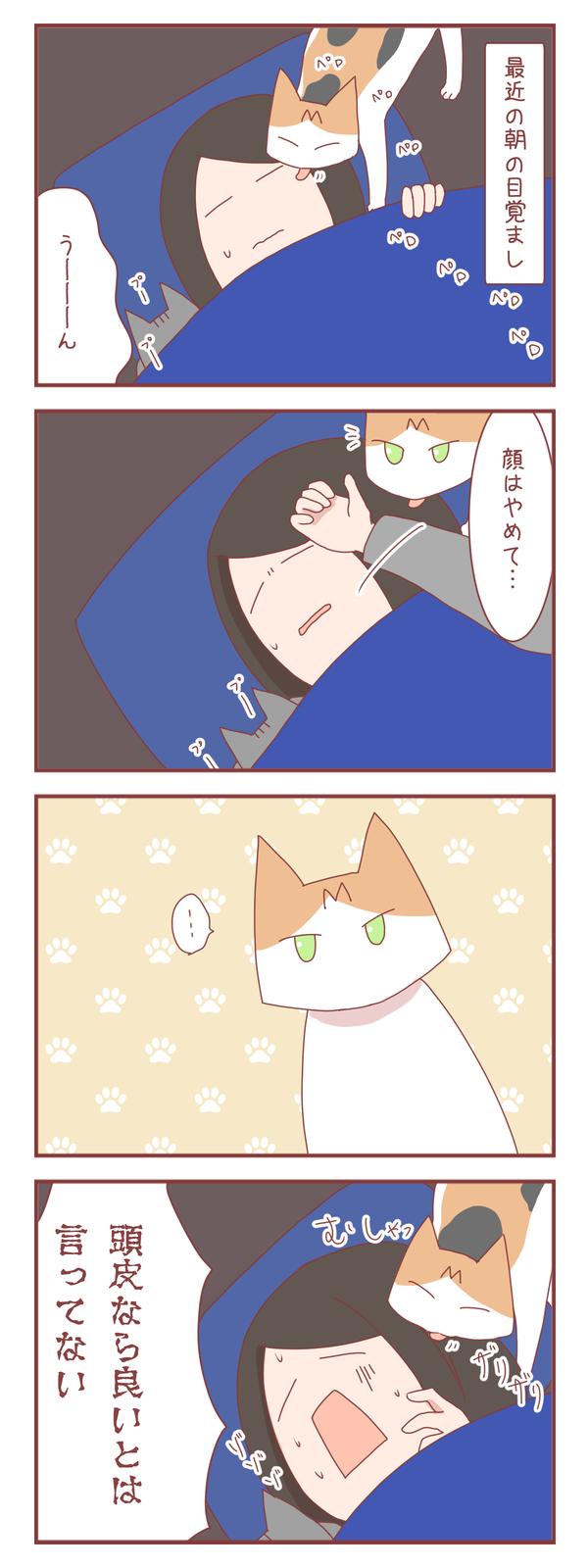 猫は人間の言葉をかなり理解してる気がする