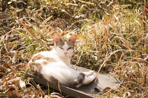 瓦の上で暖をとる猫