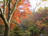 韓国民族村紅葉