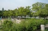 新緑の大川