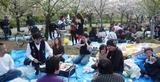 お花見201004101