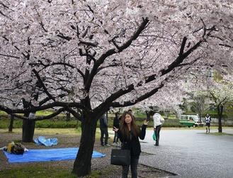 お花見桜独り占め