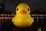 duck-h-b146[1]