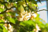 咲くやこのはな館−5