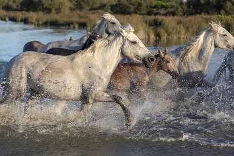 horses-3697217_640