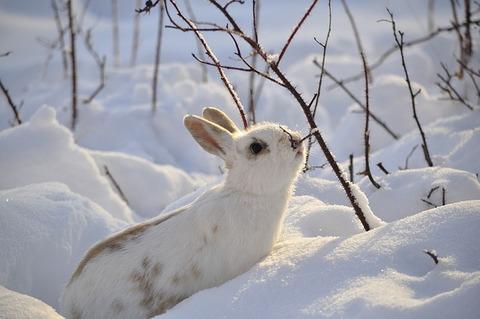 rabbit-2910054_640