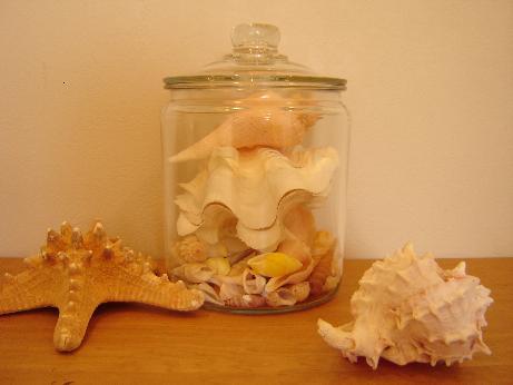 貝殻ディスプレー