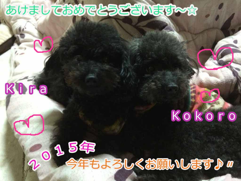 ここ&キラ☆
