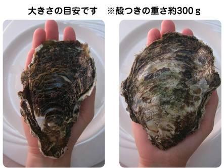 【炎上】「日本の巨大牡蠣は福島の影響じゃないのか?」と炎上→日本大使館が説明→中国人から賞賛の声