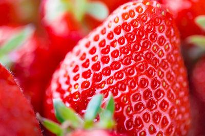 """【知的財産権保護】""""韓国のイチゴ""""はどうなる? 農水省が海外での植物知財保護急ぐ"""