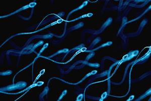 精子を使って女性の体内に薬物を送り込む画期的なガン治療法がドイツで成功wwwwwww