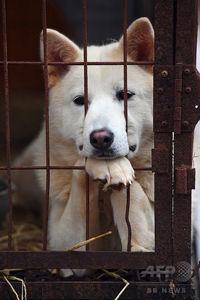 【平昌五輪】韓国・平昌の犬肉レストラン、五輪開催中のメニュー提供自粛を拒否