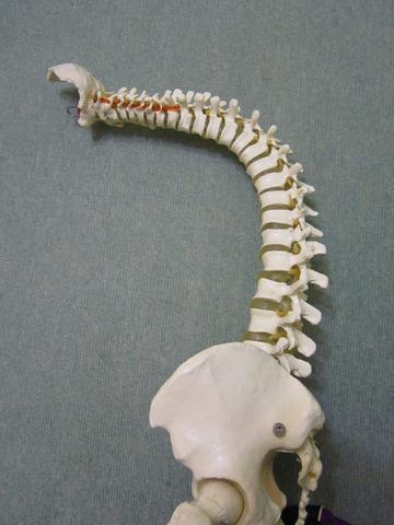 「椎間板ヘルニア」「変形性膝関節症」の真犯人は別にいる