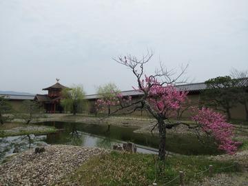 「第21回・奈良観光ラン/佐保川と秋篠川をのんびりお花見ランニング!」開催しました
