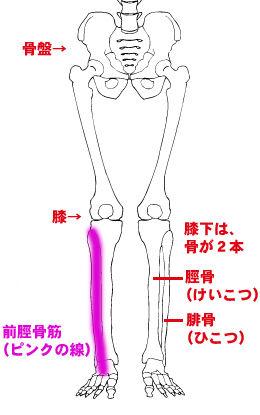 膝下(前脛骨筋)に負担がかかる理由