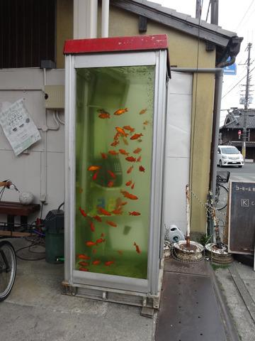 郡山 金魚ボックス