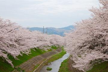第27回・奈良観光ラン/佐保川と秋篠川をのんびりお花見ランニング!
