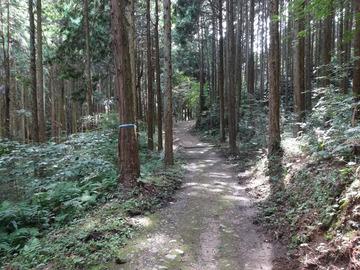 矢田丘陵-1