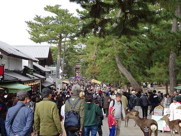 7-12-奈良公園