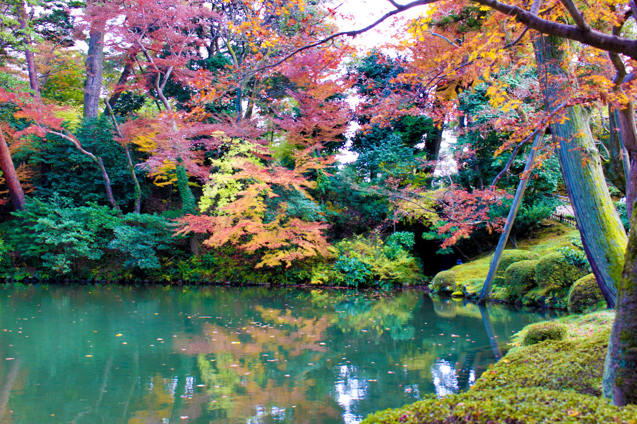 金澤の紅葉