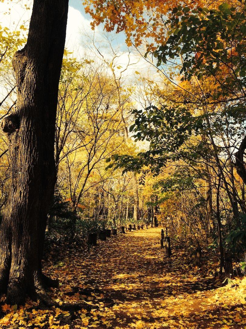 北海道と紅葉と