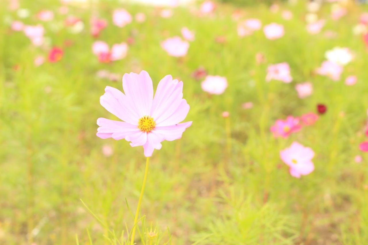 福岡のお花