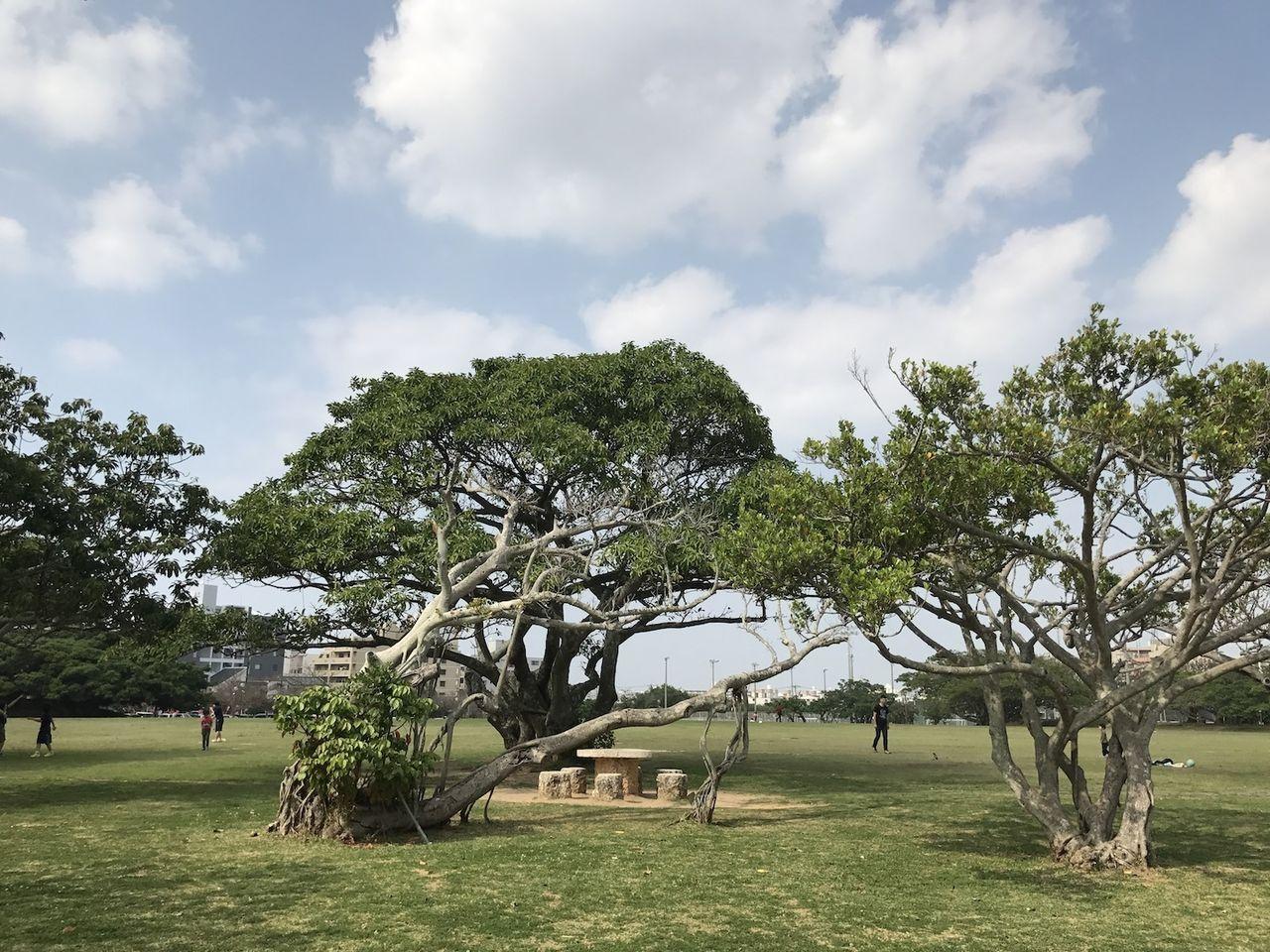 春の新都心公園