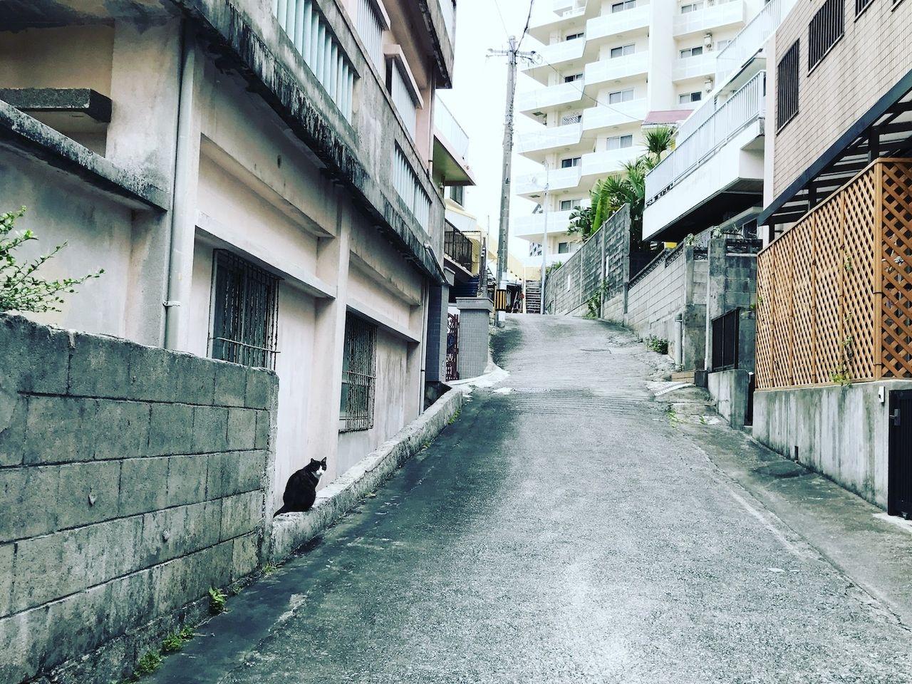沖縄とねことみち