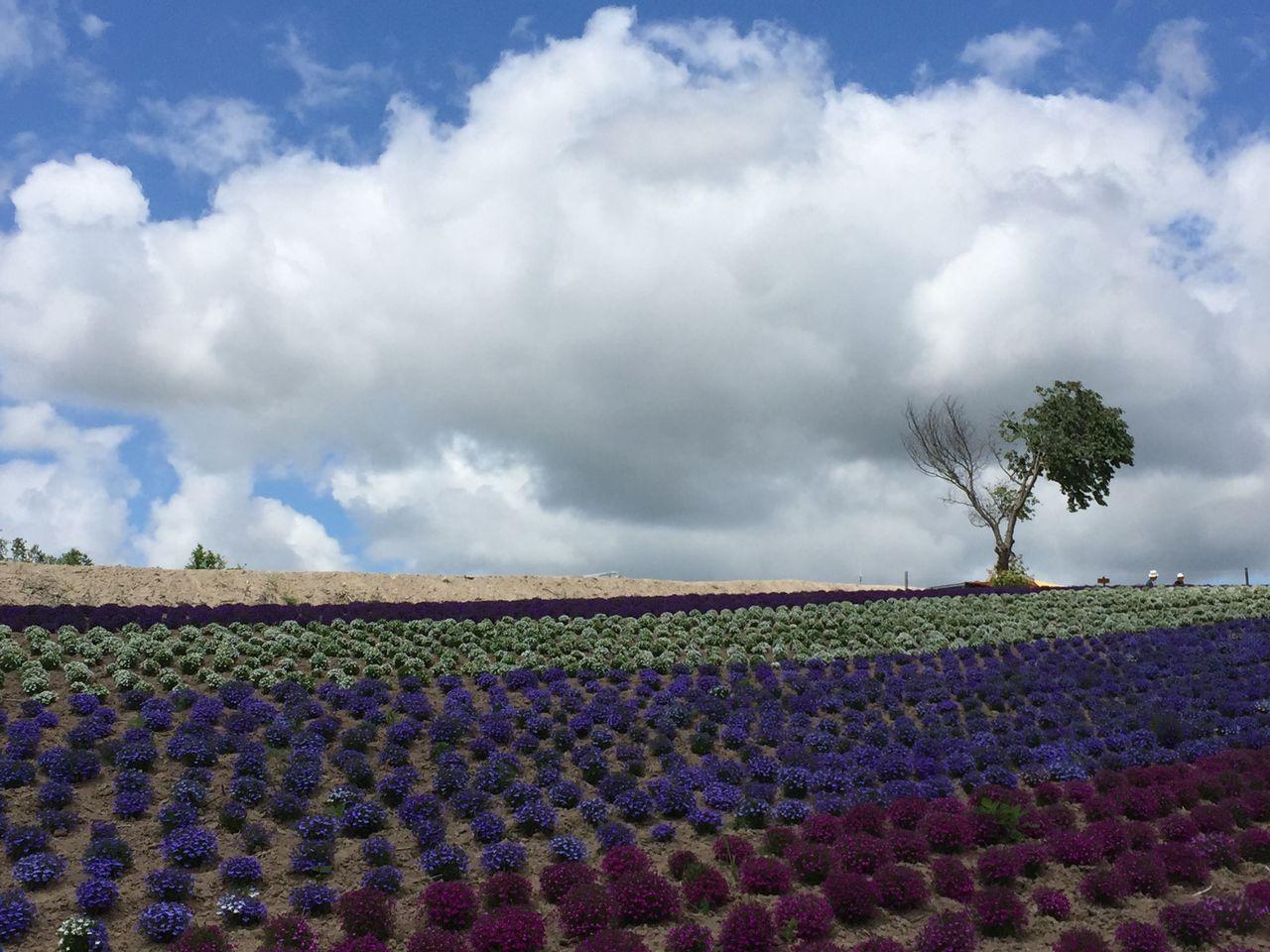 北海道 富良野