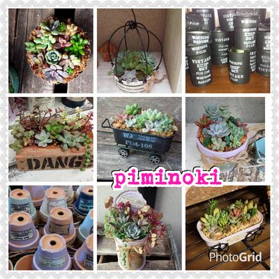 piminoki