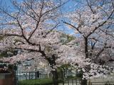 湊川公園4