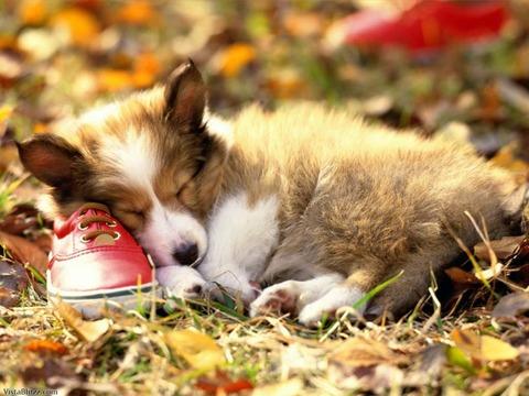 7490_Dog_Sleeping1024_768