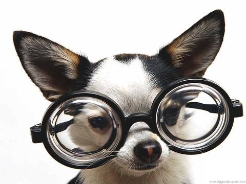 funny-dog-photos-05331fc638-1024x768
