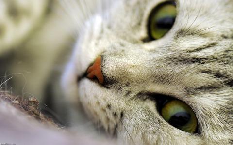 11178_Cute_Cat1680_1050