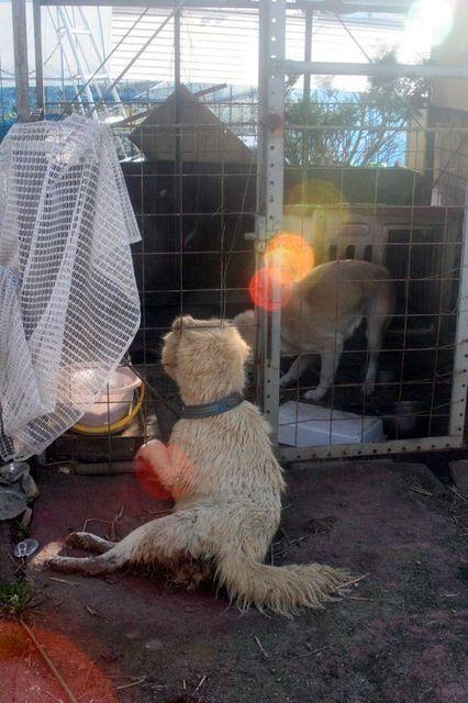 福島原発周辺で餓死した犬