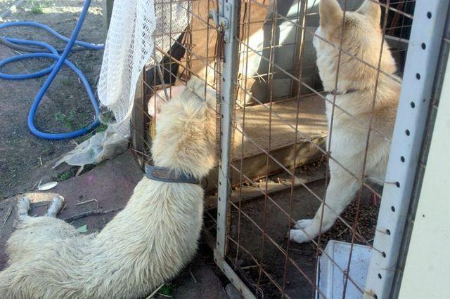 福島原発周辺で餓死した犬2