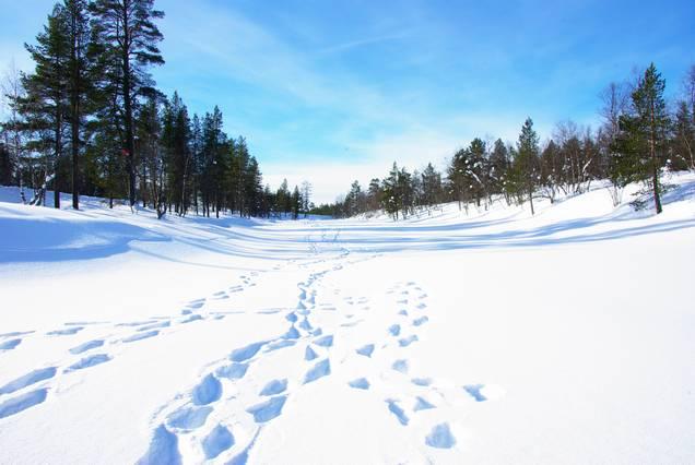 フィンランド雪