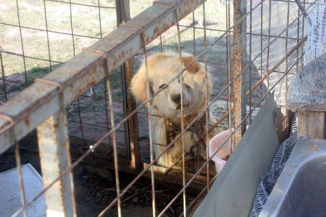 福島原発周辺で餓死した犬3