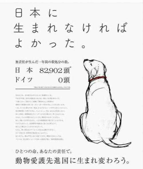 犬猫「日本に生まれなければよかった」年間殺処分【日本8万、ドイツ0】⇒
