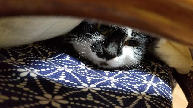 寝てる猫を起こして撫でてたら噛みつかれたわ